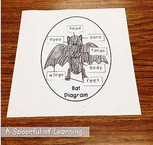 A Spoonful Of Learning  Bats  Part One