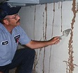 Protecting your Home Against Termites   Entomology