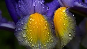 Blumen Im Juli : blumenstr usse blumengesch ft gartenbau olten aarau ~ Lizthompson.info Haus und Dekorationen