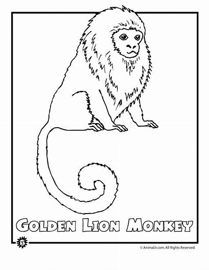 Rainforest Coloring Animals Pages Endangered Animal Jungle