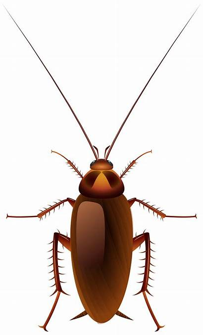 Cockroach Clip Clipart Cartoon Insects Insect Animal
