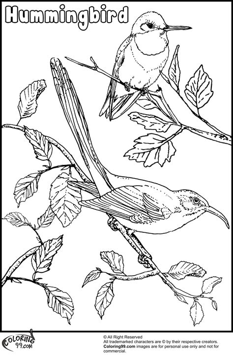 hummingbird coloring pages minister coloring