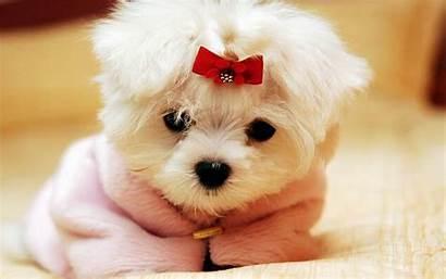 Cute Baby Animal Wallpapers Dog Pixelstalk