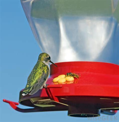 how can i keep wasps away from my hummingbird feeder