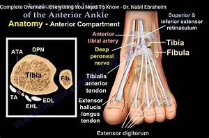 Diagnosis Of Ankle Orthopaedicprinciples Com