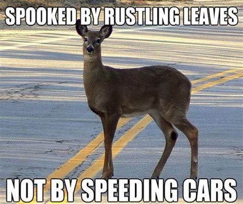 Funny Deer Memes - image gallery deer jokes