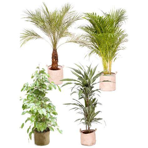 plante grimpante d interieur plantes d int 233 rieur tout savoir sur les plantes d 233 polluantes