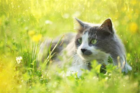 Ist Hibiskus Giftig Für Katzen » Oder Ist Er Unbedenklich?