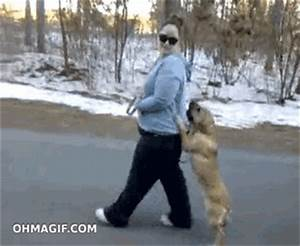 Dog walking on two legs - Funny Gifs and Animated Gifs