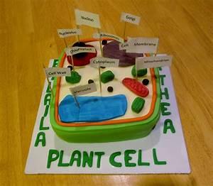 Plant Cell  Biology Homework