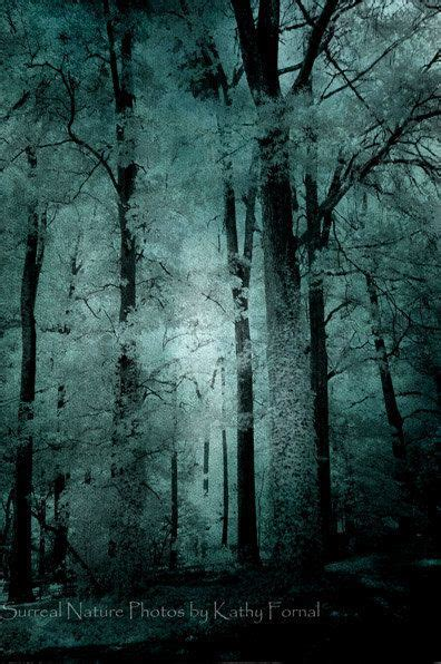 Surreal Nature Photography Haunting Woods Forest Trees