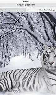 Facts about the white tiger