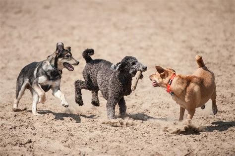 dog dogs playing chattering teeth dirt parks park pet surprising causes lifestyle