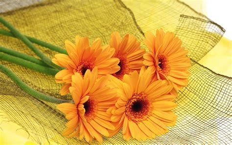 Orange Flowers Beautiful Backgrounds Hd Desktop