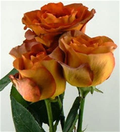 Buy orange/brown rose coffee break (ecuador) at wholesale prices & direct uk delivery. Wholesale Bulk Discount Cut Roses Colombia Ecuador Coffee ...