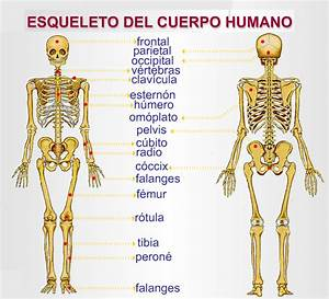 Segundoluisdegongora  El Cuerpo Humano