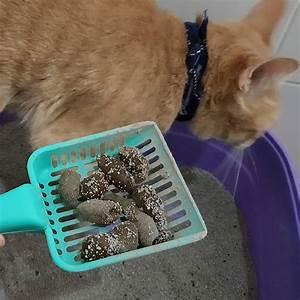 Stool Odor Chart Cat Stool Smelly Stools Item