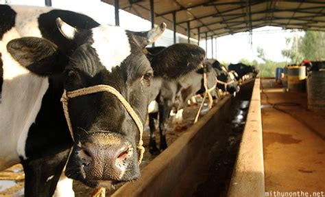 visit  amrutha dairy farm  learning experience