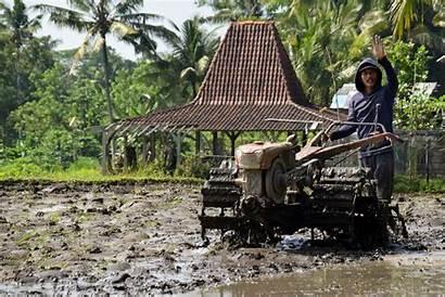 Indonesia Gambar Pertanian Reis Bajak Tanah Pxhere