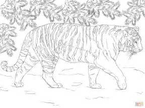 siberian tiger coloring page  printable coloring pages