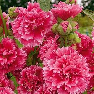 Welche Blumen Blühen Im Oktober : hitparade der besonders langbl henden stauden gartenblog ~ Bigdaddyawards.com Haus und Dekorationen