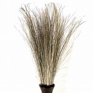 Decorative Dried Grasses Dune Grass