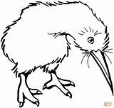 Bird Coloring Kiwi Clipart Drawing Cliparts Line Printable Clip Supercoloring Coloringbay Clipartbest Library Categories sketch template