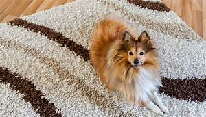 how to dog hair out of carpet