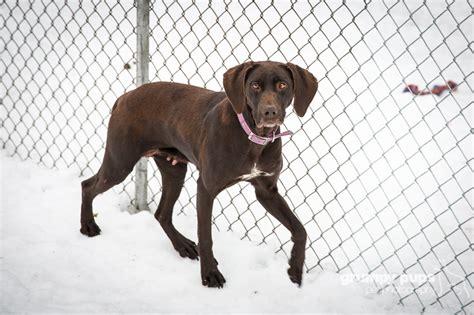 shelter dogs  adoption  michigan    pattern