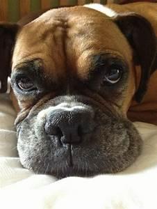 lookit that face! | BOXERS | Pinterest