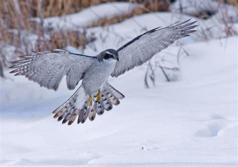 ultimate winter wildlife guide enjoy  understand