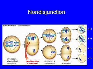 Image Gallery Nondisjunction Disorders
