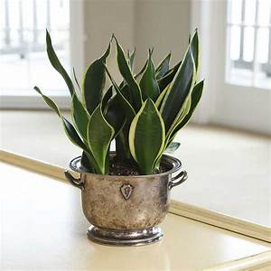 Easy, To, Grow, Houseplants, With, Colorful, Leaves