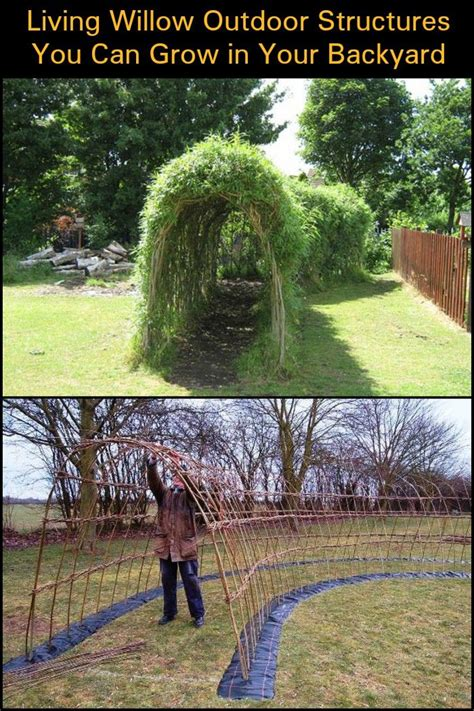 Can You A In Your Backyard by Living Outdoor Willow Structures You Can Grow In Your