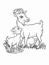 Goat Coloring Pages Baby Printable Goats Animals Print Template Recommended sketch template