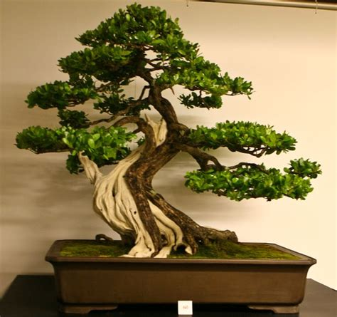 japanese style garden plants 114 best images about succulents bonsai penjing on