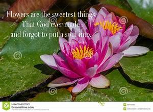 Lily Flower Quo... White Water Lily Quotes