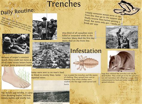 Ww1 Trenches Lice Wwwpixsharkcom Images Galleries