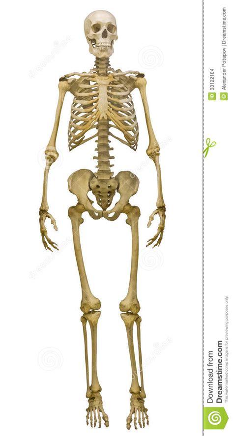 opiniones de esqueleto humano