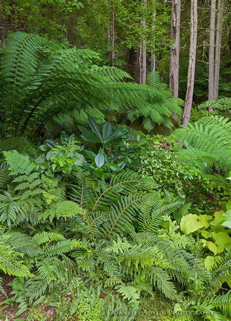 shade plants washington state 17 best images about shade garden on pinterest gardens hosta gardens and shade plants