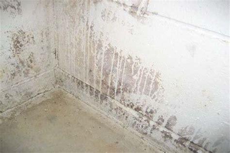 basement white mold  basement white mold wall molding