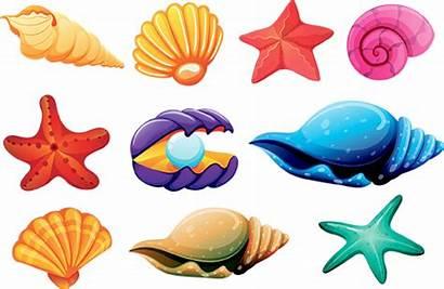 Shells Shell Seashells Clipart Sells She Sea