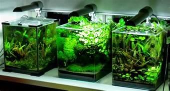 the fishtank cryptocoryne country 5 gal nano aquarium