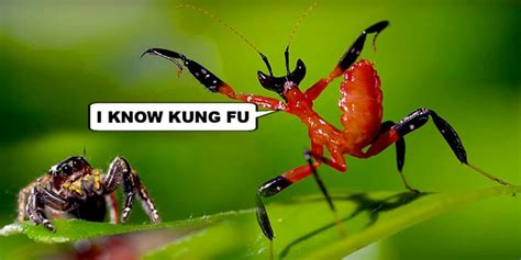 Kung Fu Mantis Vs Jumping Spider—who's Going To Win?