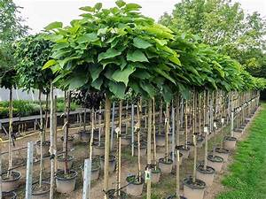 Kleine Bäume Für Garten : gartenpflanzen schimmele baumschule ~ A.2002-acura-tl-radio.info Haus und Dekorationen
