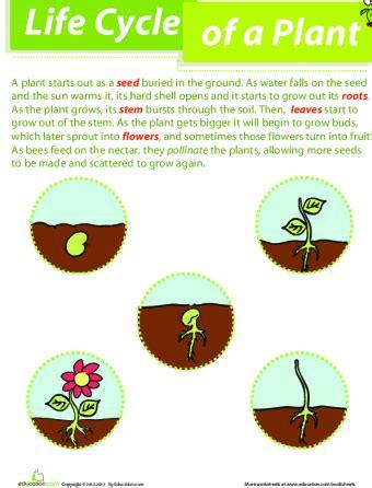 parts   plant lesson plan lesson plan educationcom