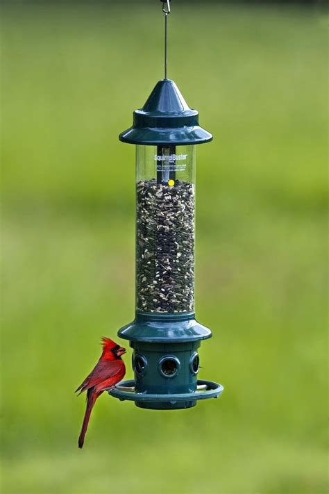backyard ideas brome 1024 squirrel buster plus wild bird