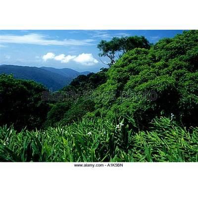 Atlantic Forest Stock Photos &