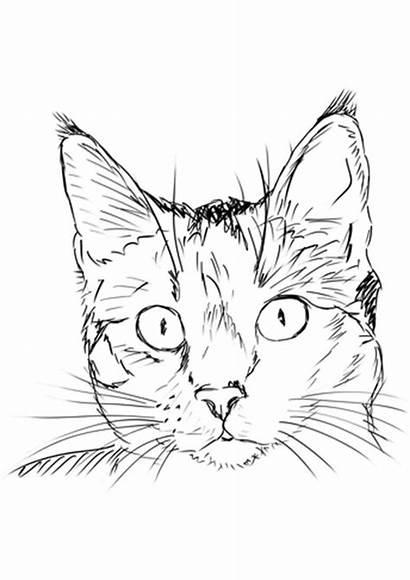 Coloring Katze Ausmalbilder Realistic Cat Printable Gato