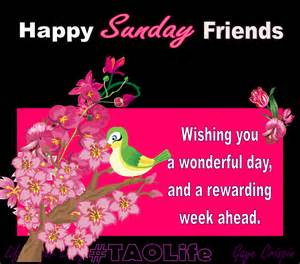 happy sunday friends pictures photos and images for and
